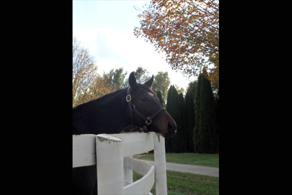 Equine Influenza Detected in Tennessee Horses