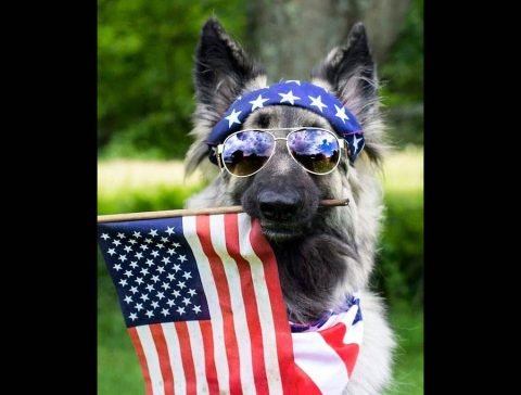 Montgomery County Animal Care and Control to have Memorial Day Specials this Saturday.