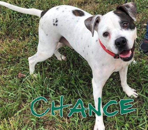 Companion Pet Rescue of Middle Tennessee - Chance