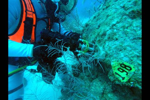 The pictured NEEMO 22 diver is collecting a scientific sample for coral research using proxy tools, techniques, technologies, and training envisioned for future NASA planetary science exploration missions. (NASA)