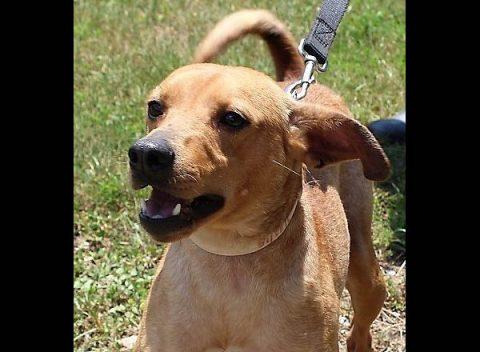 Stewart County Faithful Friends Animal Rescue - Alexander