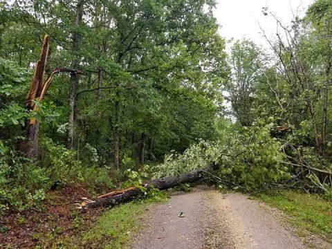 Downed tree blocking a road at Land Between the Lakes. (LBL)