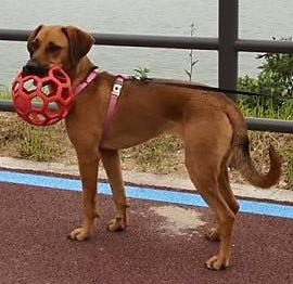 Humane Society of Clarksville-Montgomery County - Zoey