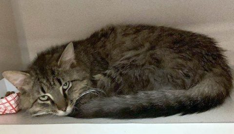 Montgomery County Animal Care and Control - Merlin