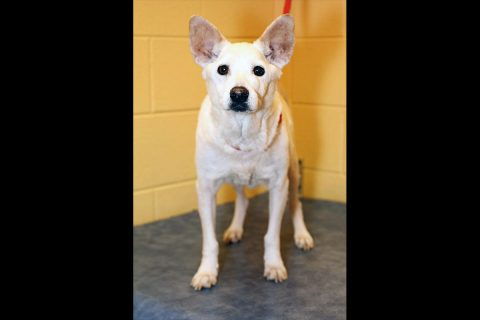 Montgomery County Animal Care and Control - Trudy