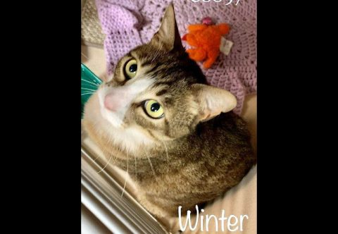 Montgomery County Animal Care and Control - Winter