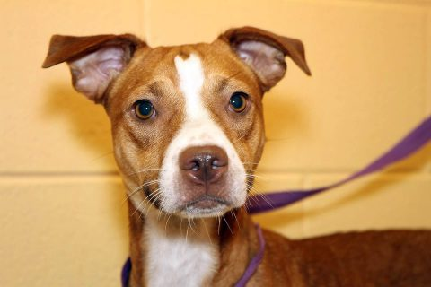 Montgomery County Animal Care and Control - Woodie