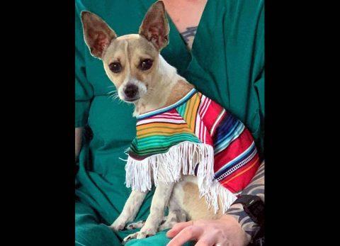 Stewart County Faithful Friends Animal Rescue - Amigo