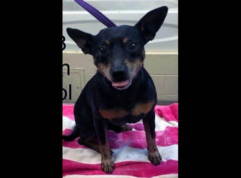 Montgomery County Animal Care and Control - Donatello