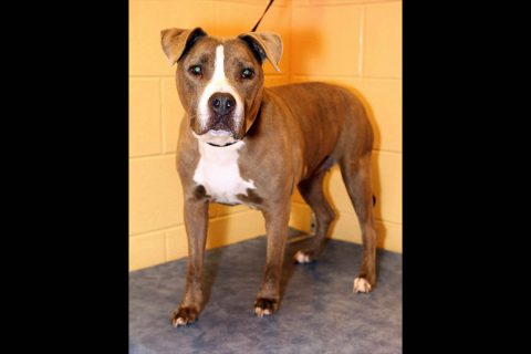 Montgomery County Animal Care and Control - Polly