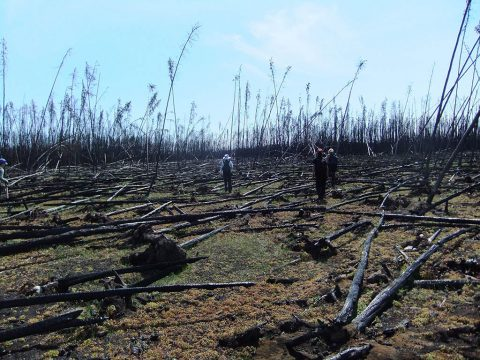 "The research team sampled more than 200 plots in the forests of Canada's Northwest Territories to see whether ""legacy"" carbon left over from previous fire cycles was threatened by the intense 2014 fires. They found that forests less than 60 years old and located in drier climates had a higher risk of losing legacy carbon in the fires than older, wetter forests. (NASA / Xanthe Walker, Center for Ecosystem Science and Society at Northern Arizona University)"