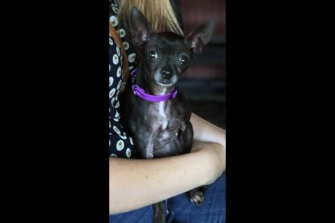 Two Ladies Caring Dog Rescue - Tinker Bell