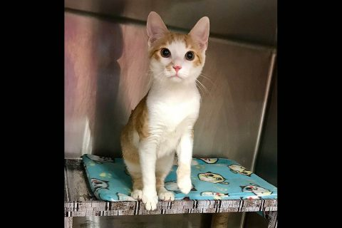Chico is available at Cats Are Us