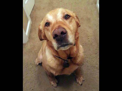 Dover Humane Society - Fasha