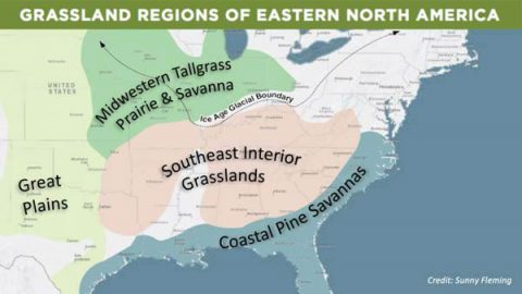 Grassland Regions of Eastern North America