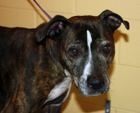 Montgomery County Animal Care and Control - Keila