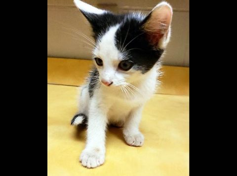 Montgomery County Animal Care and Control - Tiny