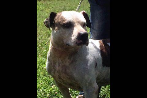 Stewart County Faithful Friends Animal Rescue - Smitty