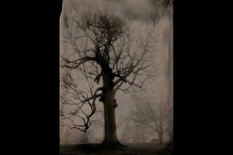 """Large Oak, Clarksville, Tennessee"" by Susan Bryant of Clarksville, Tenn., digital print from scan of 5-inch by 7-inch collodion tintype, 2017."