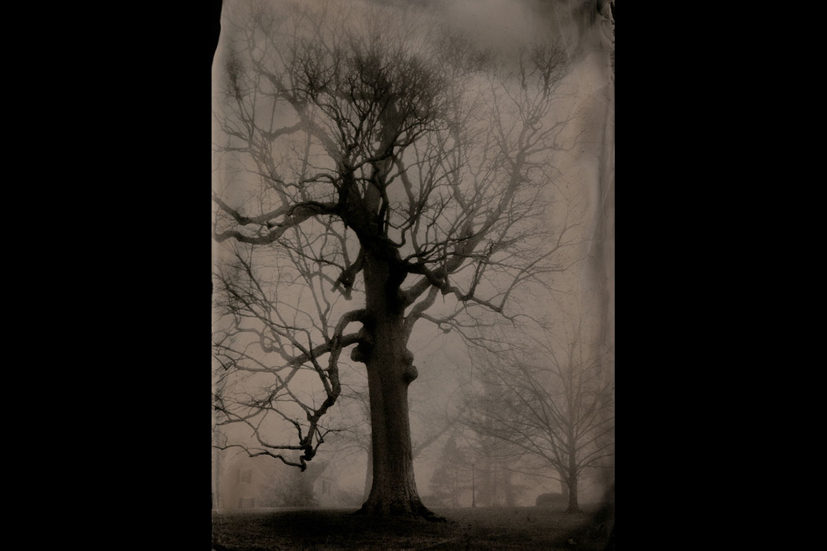 """""""Large Oak, Clarksville, Tennessee"""" by Susan Bryant of Clarksville, Tenn., digital print from scan of 5-inch by 7-inch collodion tintype, 2017."""