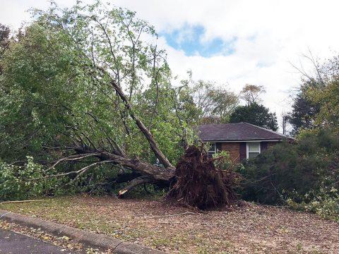 Storm Damage in Clarksville. (CDE)