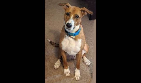Companion Pet Rescue of Middle Tennessee - Barney
