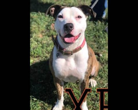 Companion Pet Rescue of Middle Tennessee - Xena