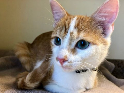 Mufasa is available at the Humane Society of Clarksville-Montgomery County.