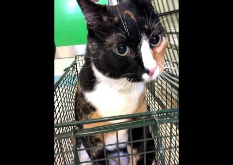 Montgomery County Animal Care and Control - Ingrid