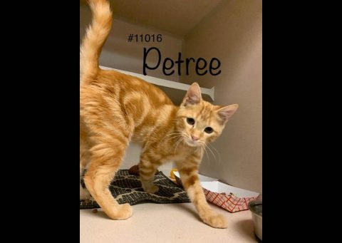 Montgomery County Animal Care and Control - Petree