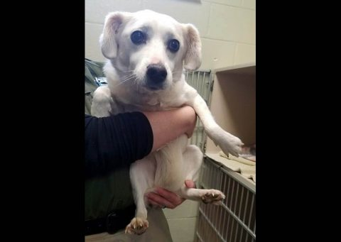 Montgomery County Animal Care and Control - Sugar