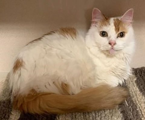 Montgomery County Animal Care and Control - Tulip