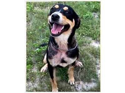 Stewart County Faithful Friends Animal Rescue - Stormy