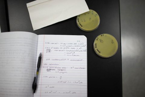 "Gabrielle Rueff's notes show how she's working out how many phages she has ""grown."" (APSU)"