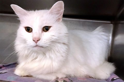 Nina is available at Cats Are Us