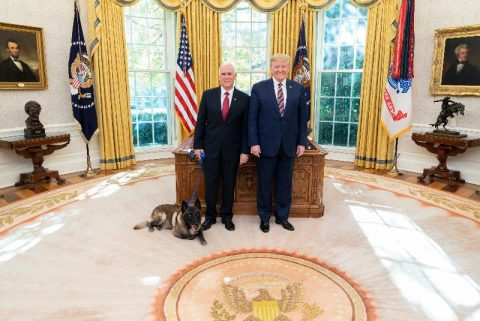 President Donald J. Trump and Vice President Mike Pence welcome Conan to the Oval Office, (Official White House Photo, Shealah Craighead)