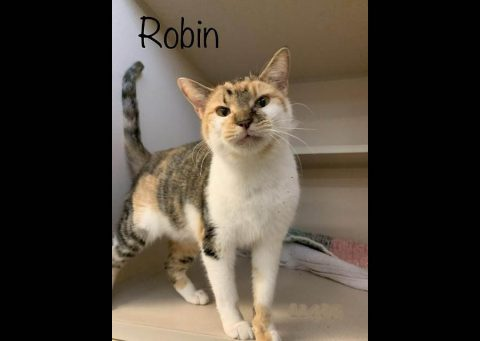 Montgomery County Animal Care and Control - Robin