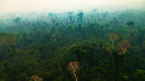The Amazon rainforest. (Marcio Isensee e Sa, Adobe Stock)