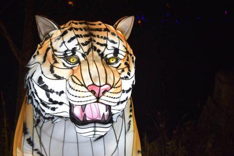 Zoolumination: Chinese Festival of Lights. (Nashville Zoo)