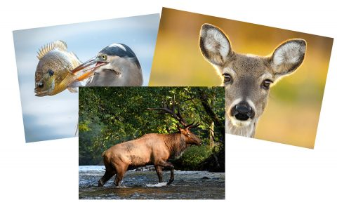 2020-21 Photo Contest now underway for Tennessee Wildlife Magazine Calendar.