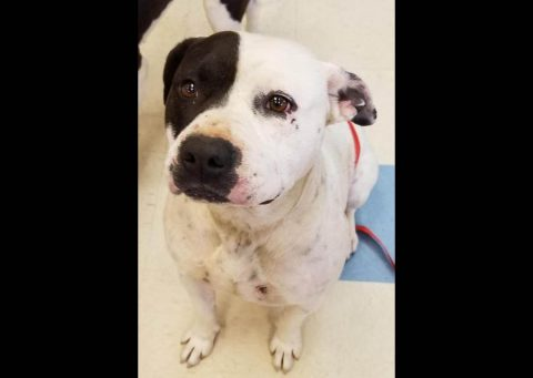 Montgomery County Animal Care and Control - Spud