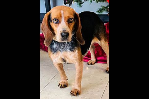 Companion Pet Rescue of Middle Tennessee - Daisy