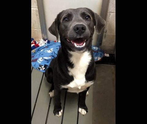 Grimi is available at Montgomery County Animal Care and Control.
