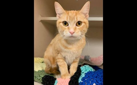 Peaches is available at Montgomery County Animal Care and Control.