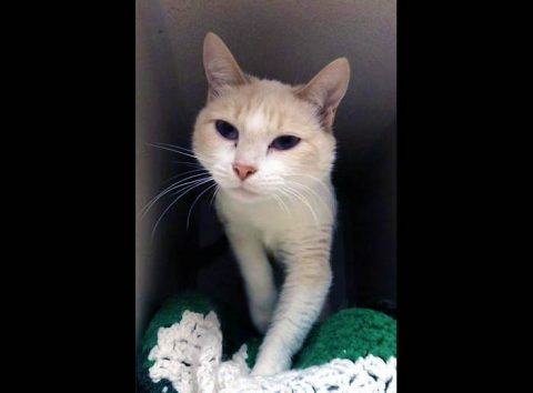 Montgomery County Animal Care and Control - Petrie