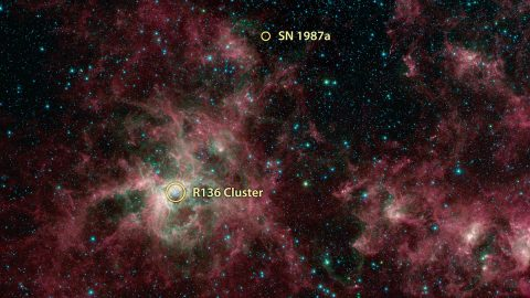 This annotated image from NASA's Spitzer Space Telescope shows the Tarantula Nebula in infrared light. The supernova 1987A and the starburst region R136 are noted. The magenta-colored regions are primarily interstellar dust that is similar in composition to ash from coal or wood fires on Earth. (NASA/JPL-Caltech)