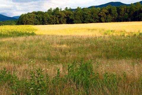 Tennessee Grasslands