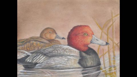 Collectible Waterfowl Stamp