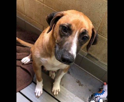 Montgomery County Animal Care and Control - Sesame