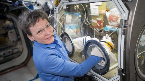 Commander Peggy Whitson works on the OsteoOmics bone cell study that uses the Microgravity Science Glovebox inside the U.S. Destiny laboratory in May 2017. OsteoOmics investigates the molecular mechanisms that dictate bone loss in microgravity by examining osteoblasts, which form bone, and osteoclasts, which dissolve bone. (NASA)
